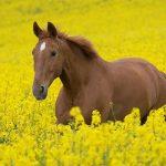 تعبیر اسب