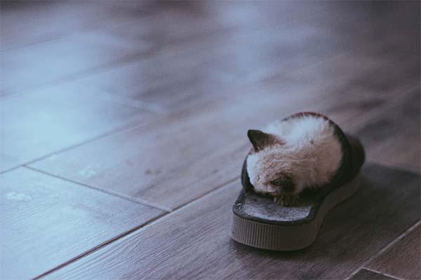 تعبیر خواب دمپایی